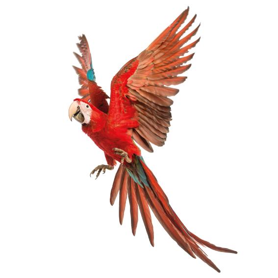 links kijkende papegaai